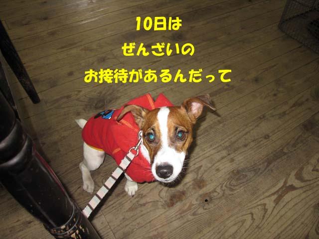 Img_0394